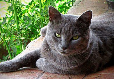 Mačak Pantelija, curriculum vitae